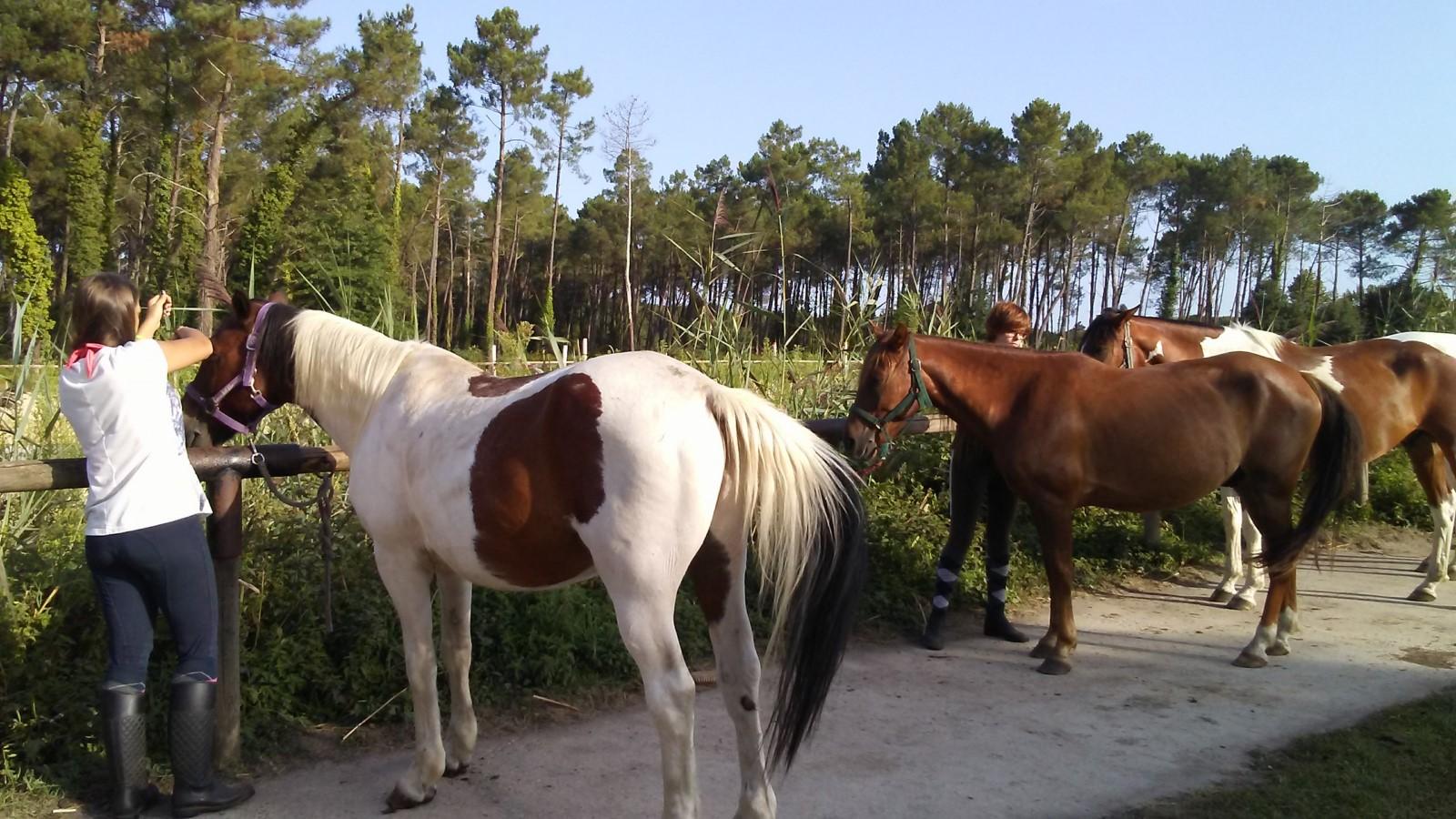 Faire à cheval 2018 (2) [1600x1200]